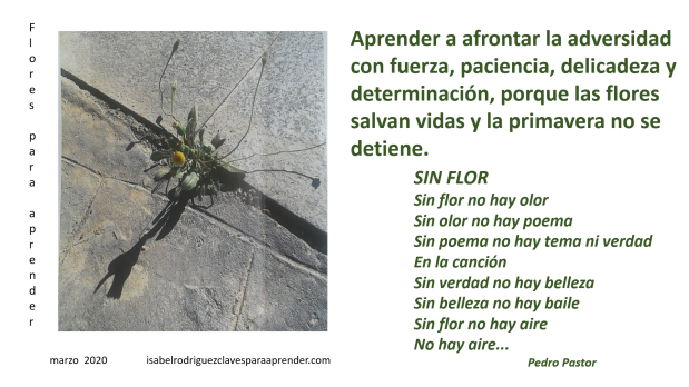 blog Pedro Pastor